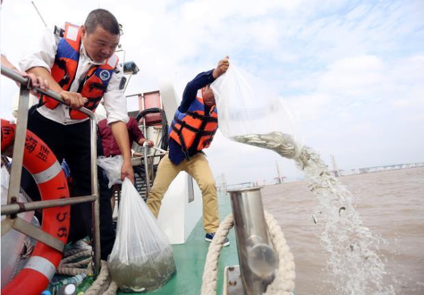 """从""""破坏者""""到""""修复者"""" 瑞安4名渔民放流3.6万余尾鱼苗"""